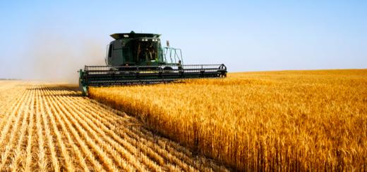 micotossine in agricoltura